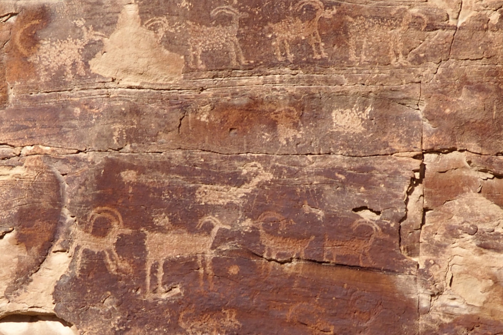 Petroglyph panel with Rocky Mountain Big Horn Sheep